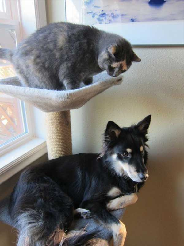 hunder-liker-katteting (13)