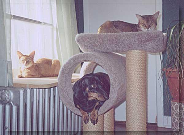 hunder-liker-katteting (14)