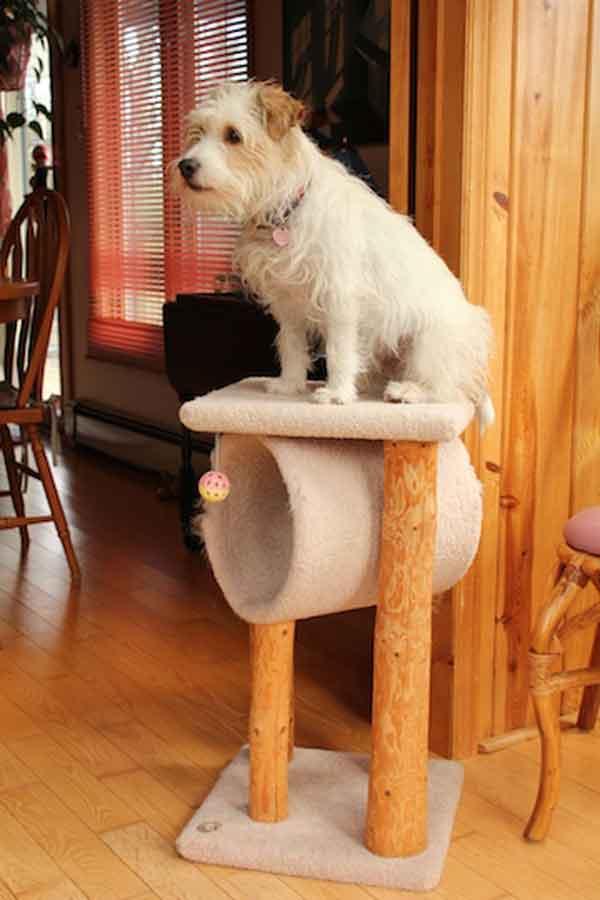 hunder-liker-katteting (15)