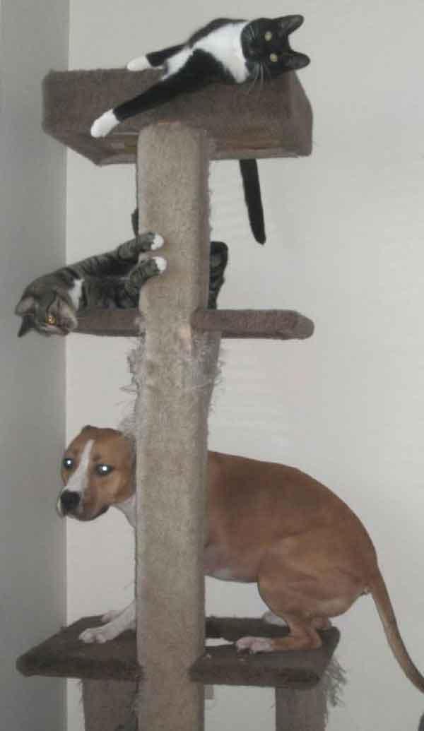 hunder-liker-katteting (16)