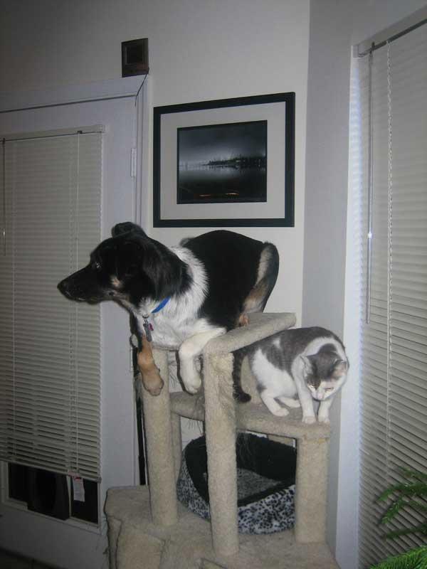 hunder-liker-katteting (17)