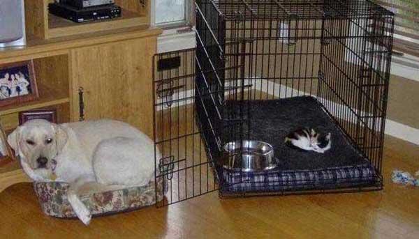 hunder-liker-katteting (18)