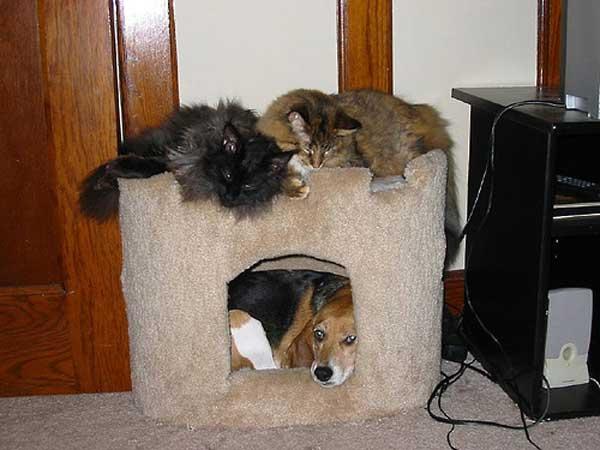 hunder-liker-katteting (3)