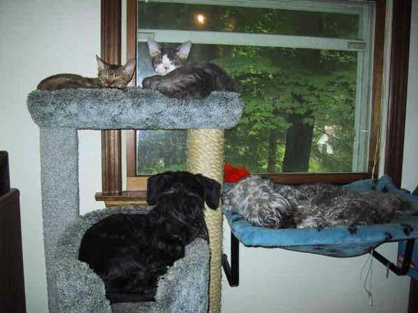 hunder-liker-katteting (5)