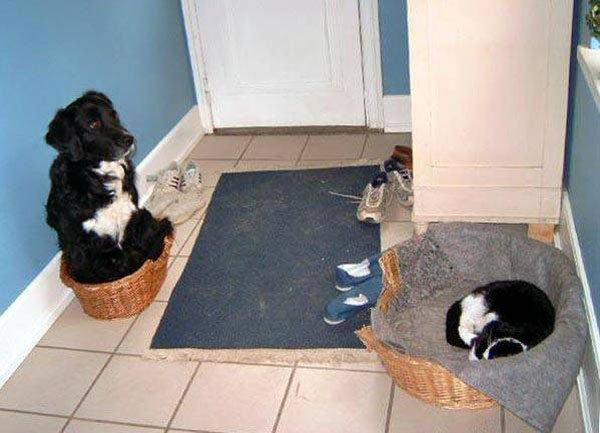 hunder-liker-katteting (8)