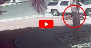 Da en hund gikk til aggressivt angrep på en gutt, kom hjelpen fra uventet hold… Utrolig.