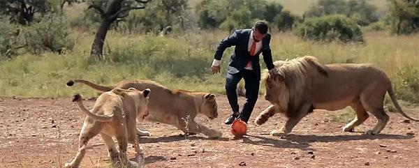 lion (9)