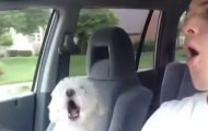 Denne valpens herlige reaksjon på at han skal på kjøretur vil lyse opp dagen din. Volum påkrevd.