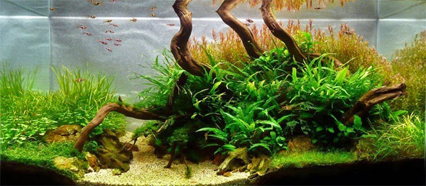 water-forest11