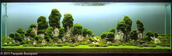 water-forest15