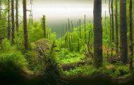 Øynene dine bedrar deg på den mest utrolige måten. Se nærmere… Dette er ingen vanlig skog.