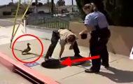 Denne anden kvakket som en gal. Så kom en politibetjent ruslende forbi. Se dette.