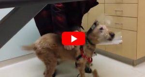 Duffy var blind. Etter øyeoperasjonen ser han familien sin for første gang.