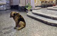 Jeg brøt sammen av hvorfor denne hunden går i kirken hver uke. Skulle ønske han kunne forstå.