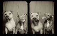 Dette er hva som skjer når du putter to hunder i en fotoboks sammen. Hint: Det er fantastisk.
