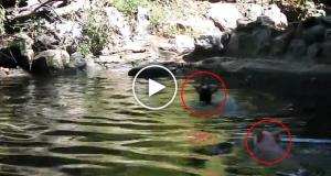 Denne geitebukken holdt på å drukne. Jeg trodde ikke mine egne øyne da jeg så hvem som reddet ham.