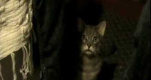 Hehe… Du vi aldri se på katter på samme måte etter dette.