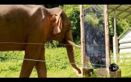 Hodet mitt eksploderte akkurat. Se hva som skjer når denne elefanten ser seg selv i speilet.