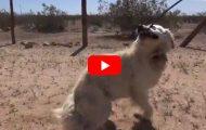 Mammahund og valpene hennes holdt på å dø i ørkenen. Dette er den BESTE redningsaksjonen jeg har sett.
