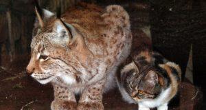 Denne hjemløse katten snek seg inn i en dyrepark. Det den gjorde der er hysterisk… Men så bedårende.