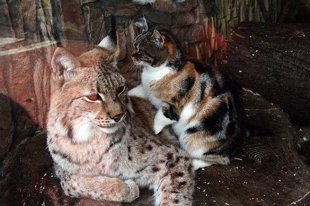 katt-gaupe (2)
