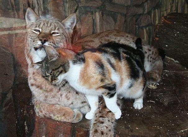 katt-gaupe (3)