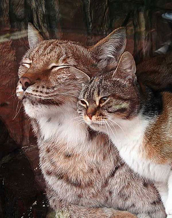katt-gaupe (4)