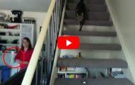 Alle katter jeg vet om løper og gjemmer seg. Jeg har aldri sett en katt gjøre DETTE.