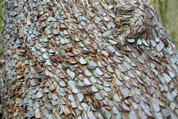money-trees4