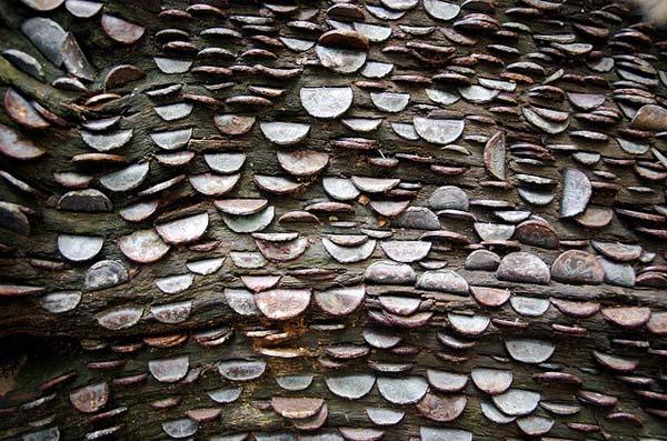 money-trees5