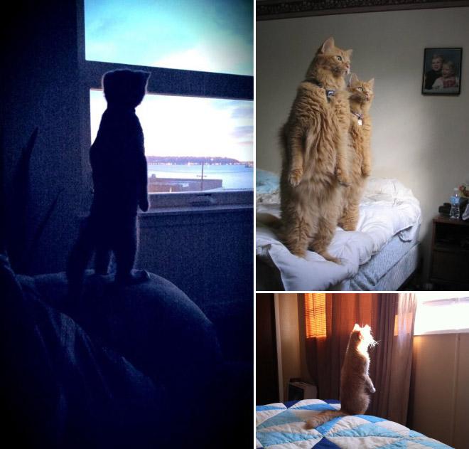 oppreiste katter (13)