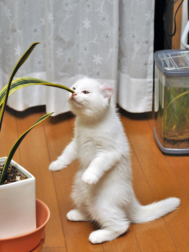 oppreiste katter (15)