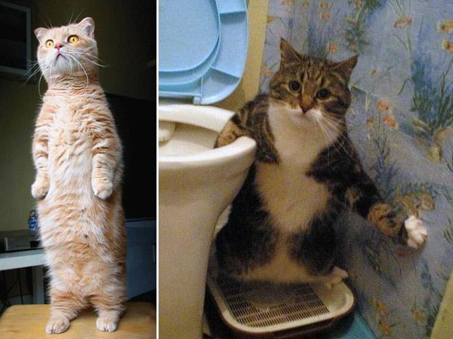 oppreiste katter (16)