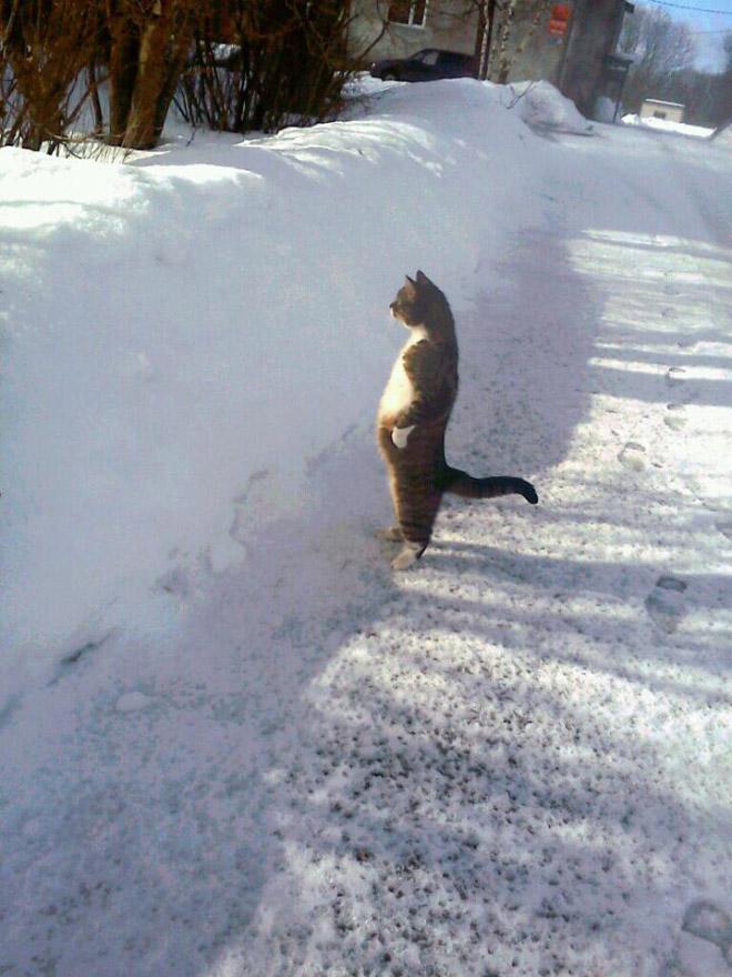 oppreiste katter (17)