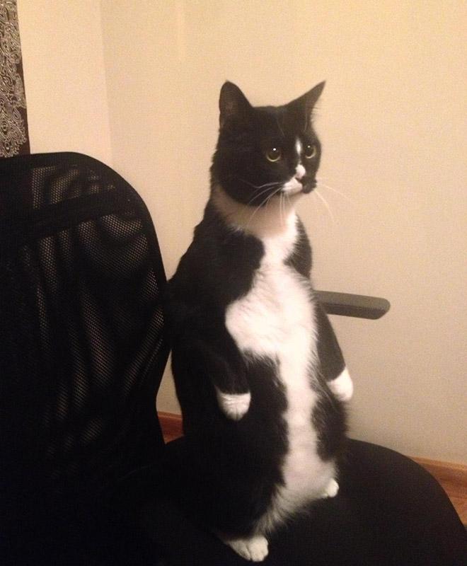 oppreiste katter (2)