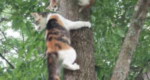 Det denne pusemoren gjør når kattungen hennes er fanget i treet er latterlig søtt. Bare se.