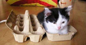 Så lenge det passer, finnes det plasser. 20 katter som beviser at ingen steder er for trange.