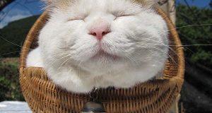 Følt deg anspent i det siste? Denne søvnige katten vil få deg til å slappe av.