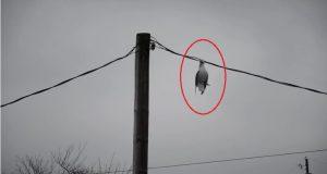 Denne fuglen var fastlåst i en strømledning og klamret seg fast til livet. Men vent til du ser hva som skjedde.