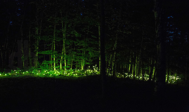 magisk skog (2)
