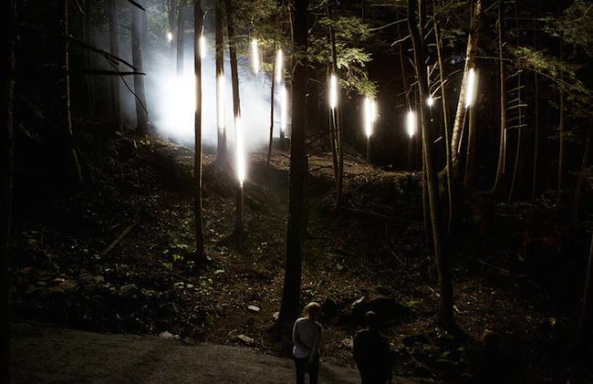 magisk skog (3)