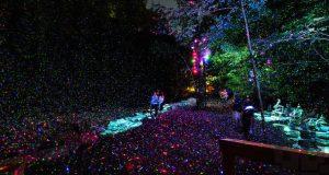 Drømmer jeg? Denne parken forvandles til en opplyst, magisk skog om natten.