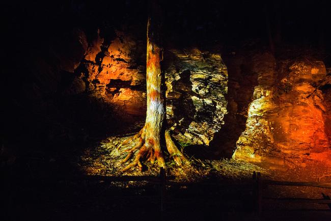magisk skog (4)