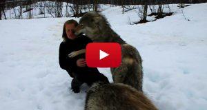 Jeg var dritnervøs da en ulveflokk kom bort til denne kvinnen… Så fikk jeg hakeslepp!