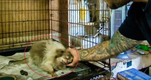 Denne hunden var innelåst i et bur som hadde rustet igjen. Da de åpnet det hendte dette. Wow.