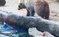 En kråke holdt på å drukne like ved en bjørn i dyreparken. Det som deretter skjedde er sjokkerende.