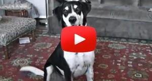 Denne lo jeg godt av. Det er denne hundens bursdag, og du gjetter aldri hva han ønsker seg.