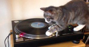 Denne katten oppdaget akkurat en platespiller. Se hva hun gjør når hun hører sangen «hennes».