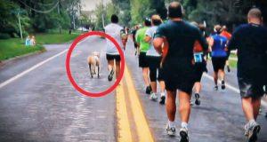 Denne hunden så maratonløpere springe forbi hans hjem. Du må se hva som skjedde etterpå!