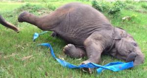 Det denne baby-elefanten gjør etter å ha blitt reddet, er det beste du vil se i hele dag.
